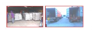 Corpovex  gestiona exportación de frijoles hacia Vietnam