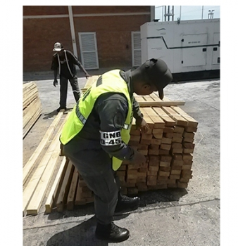 Gobierno nacional exporta madera de pino caribe hacia República Dominicana